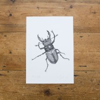 Ben Rothery Stag Beetle