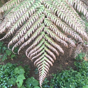 Beautiful Ferns   Bugs & Birds